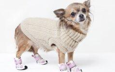 Ar šunims tikrai reikia drabužių ir batų