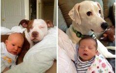 Tikra meilė - mažyliai ir jų ištikimiausios auklės