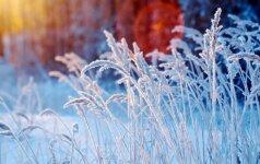 Horoskopas savaitei (gruodžio 12 d. –18 d.): daug žadantis laikas
