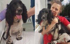 Su svarmeniu ant kaklo skandintas šuo atsidūrė naujose rankose: paaiškėjo svarbių aplinkybių