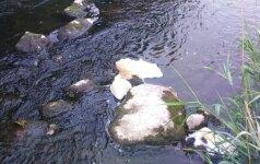 Minijos upėje krito keli šimtai žuvų: aplinkosaugininkai pradėjo tyrimą