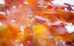 Astrologės Lolitos prognozė spalio 20 d.: netikėtumų diena