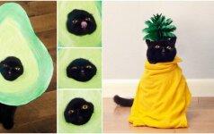 Avokadas – katinas, turintis mažiausiai 8 asmenybes