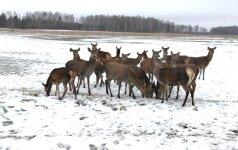 5 pavojingiausi gyvūnai Lietuvoje