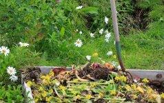 7 priežastys, kodėl verta kompostuoti