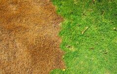 Ką daryti, jei neauga žolė