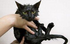 Monstrė katė laikė įkaitais ir sužalojo senolių porelę + VIDEO