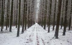 Miško savininkams siunčiama žinia