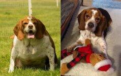 Peršerta kalytė negalėjo nė paeiti: gelbėtojai gyvūną pakeitė neatpažįstamai