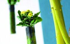 Kūrybiškas sprendimas: netikėtos augalų kompozicijos