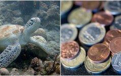 Atlikta neįprasta operacija: veterinarai jūrinio vėžlio skrandyje rado 915 monetų