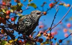 Keisti būdai, kaip iš savo sodo išbaidyti bebrus ir smaližius paukščius