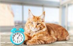 Nepamirškite: sekmadienį suksime laikrodžius