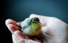 Ką daryti radus gyvūną ar paukštį?