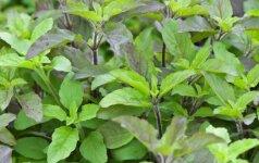 Prieskonis – antioksidantas, puikiai valantis kraujagysles