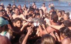 Begalinis žmonių žiaurumas: dėl asmenukės nužudė mažą delfiną