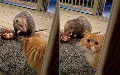 Vargšas katinėlis: jo reakcija į maisto vagį prajuokino internautus