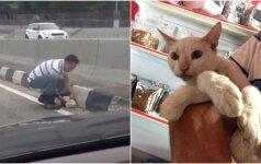 Nufilmuotas kilnus poelgis: greitkelyje vyras išgelbsti katino gyvybę