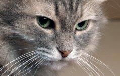 Žmones trikdantis kačių įprotis: kaip to išvengti?