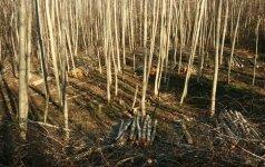 Ar verks miškai dėl biokuro plėtros?