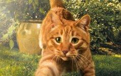 """Startuoja projektas """"Labas, kačiuk!"""": bus ieškoma namų mažiausiems prieglaudos gyventojams"""