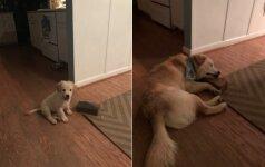 Plytą užkėlė ant besiraitančio kilimo krašto: šuns reakcija buvo netikėta