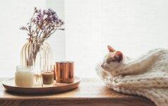 Dizainerės patarimai, kaip sukurti jaukius namus, iš kurių nesinorės išeiti
