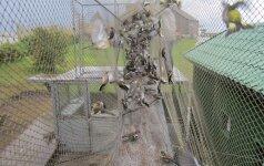 Ventės rago ornitologinės stoties laukia dideli pokyčiai