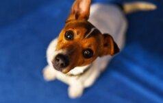 Dažniausios jaunų gyvūnų ortopedinės problemos: ką reikia žinoti?