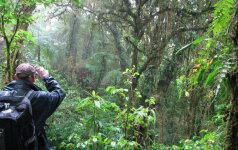 Atogrąžų miškai telefonu patys praneš apie kirtimus