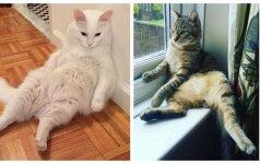Juokingiausios nuotraukos - kai katinai įsivaizduoja esantys žmonės
