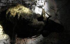 Už medžioklės taisyklių pažeidimą – tūkstantinė bauda