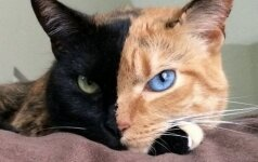 Tokios katės jūs tikriausiai dar nematėte