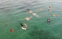 Kroatijos saloje – šunų ir jų šeimininkų plaukimo ir bėgimo varžybos