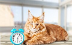 Šiandien minima kačių diena: jų draugija džiaugiasi kas ketvirtas namų ūkis šalyje
