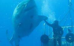 Nepaprastas pasimatymas po vandeniu: naras pasisveikina su pačiu didžiausiu rykliu