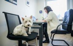Lietuvos oro uostų biuras: kartu darbuojasi ir šunys