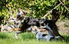 Šunų elgesys, kurį matė kiekvienas: ką iš tiesų jis reiškia?