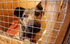 Pasaulinę gyvūnų dieną – pagalbos šauksmas iš globos įstaigų