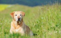 Pasiūlė naują paslaugą: galima apdrausti šunis ir kates