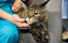 Veterinarė atsakė į kačių šeimininkams svarbiausius klausimus: ką reikia žinoti?