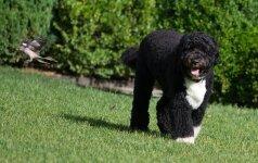 JAV Prezidento Bo – šuo, nesukeliantis alergijos (foto)