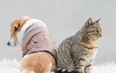 Įsigaliojus pasikeitimams žmonės skuba registruoti savo gyvūnus