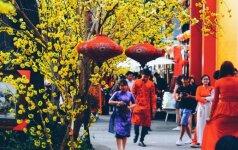 Naujųjų metų šventimo ypatumai Vietname: prietarai ir tradicijos