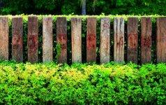 10 originalių gyvatvorių idėjų