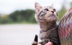 """<a href=""""https://www.delfi.lt/letena/labas-kaciuk/katalogas/"""">Kačiukų katalogas: kviečiame pasiimti kačiuką iš prieglaudos</a>"""