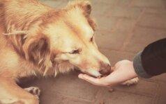 Taivane uždrausta valgyti šunis ir kates