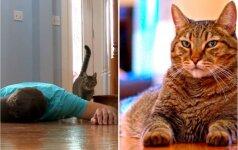 Šeimininkas suvaidino savo mirtį: jo katės reakcija nustebino ir visko mačiusius