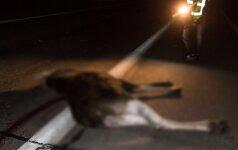 Kokių gyvūnų kelyje reikia saugotis labiausiai