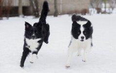 Vilnietė Agnė: aktyvus laisvalaikis su šunimis sustiprina ryšį